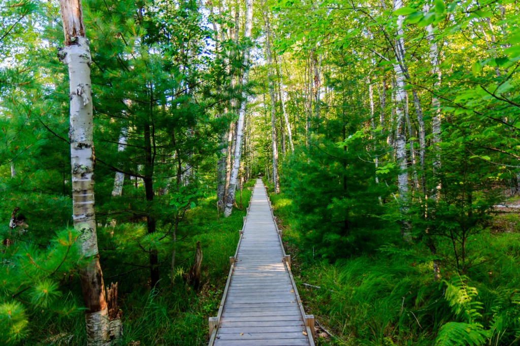 This trail through wetlands was easy to follow.