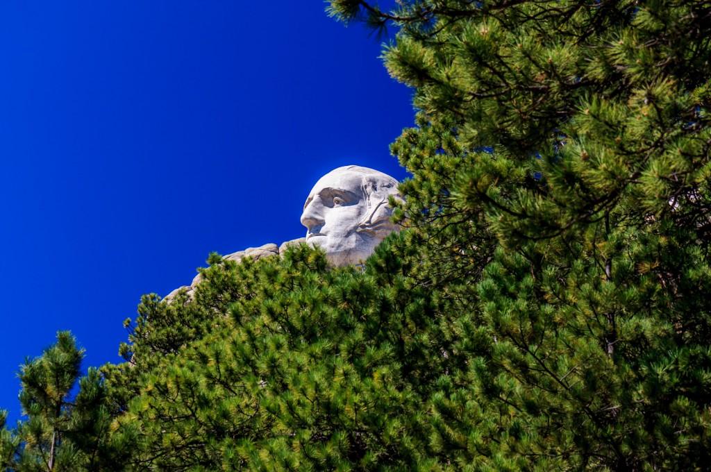 Washington through the trees