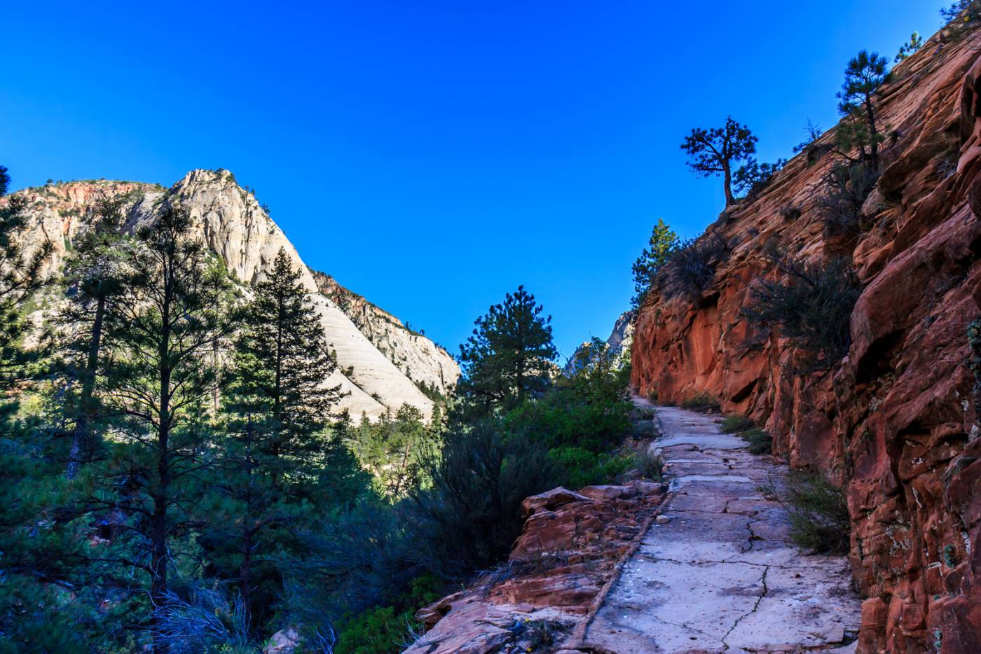 On the West Rim Trail.