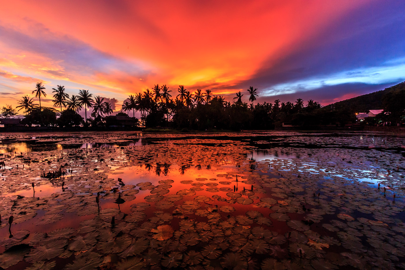 Sunset on the lotus pond.