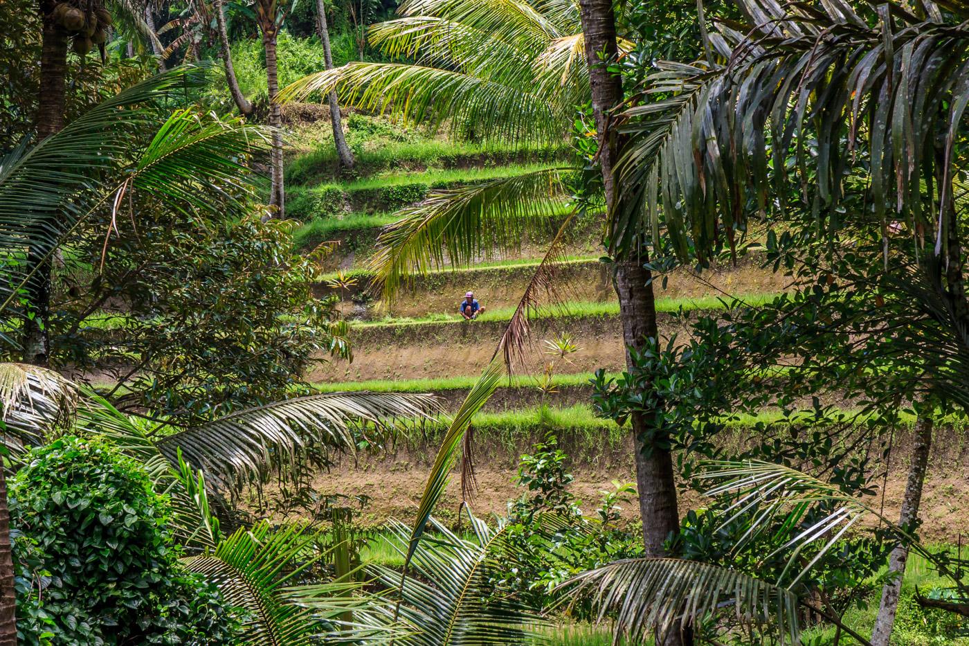 A farmer on the terraces.