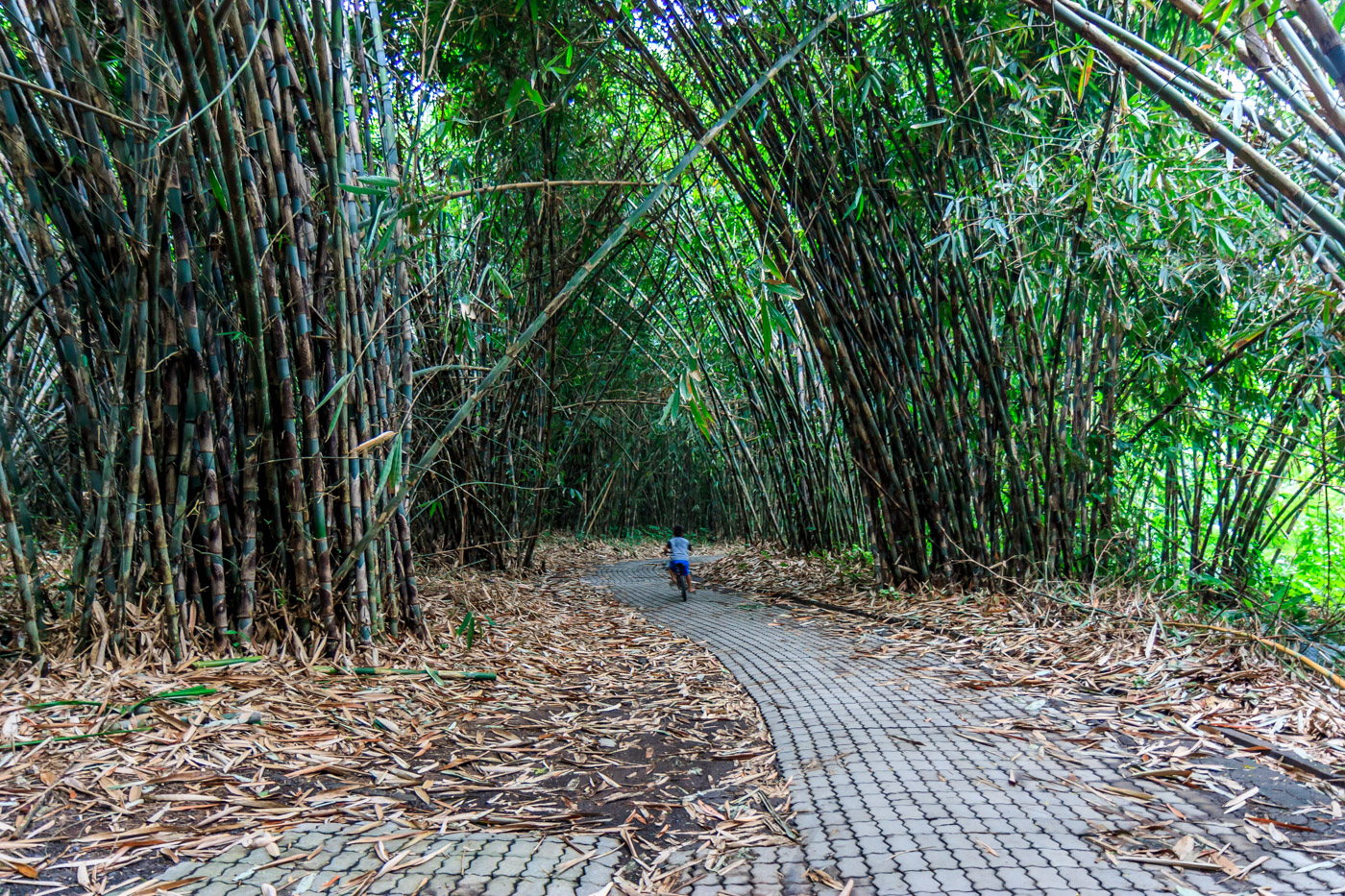Riding in the bamboo forest.