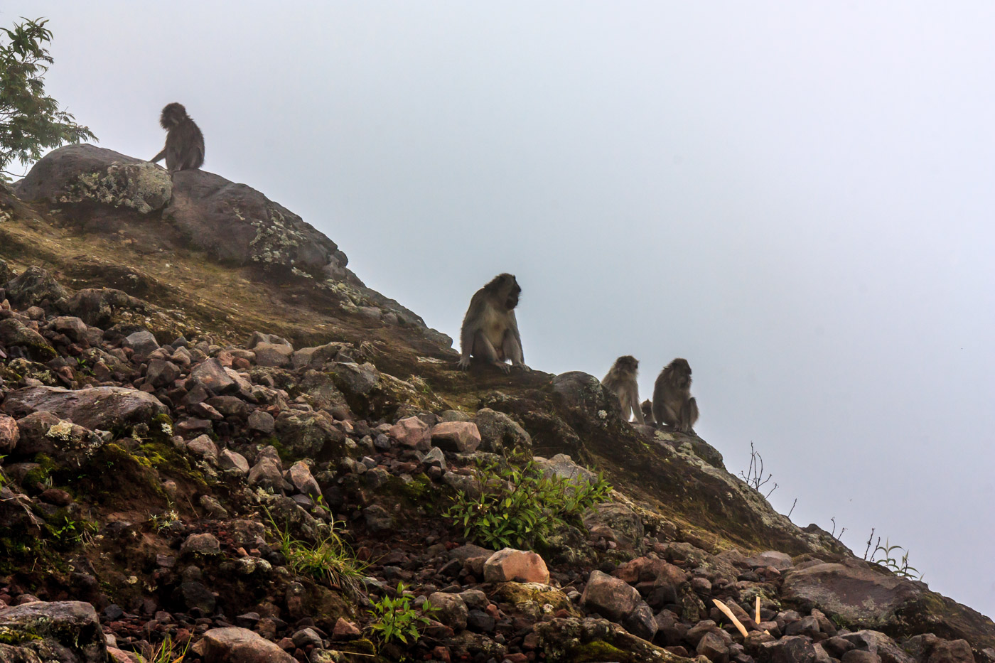 We were surrounded by monkeys. What were they doing up there?