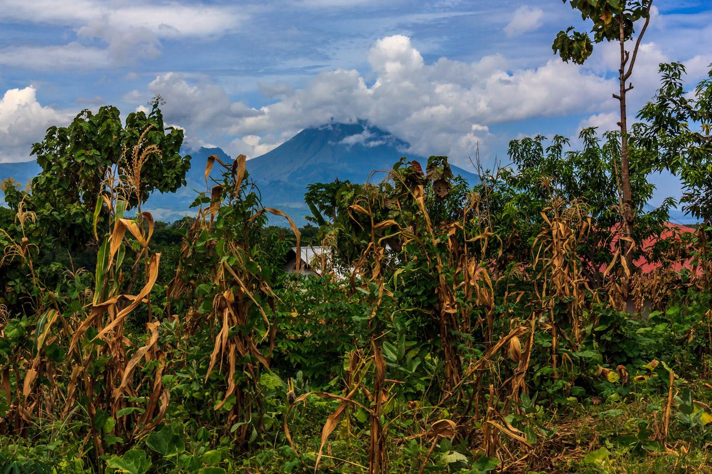 Volcano through the corn.