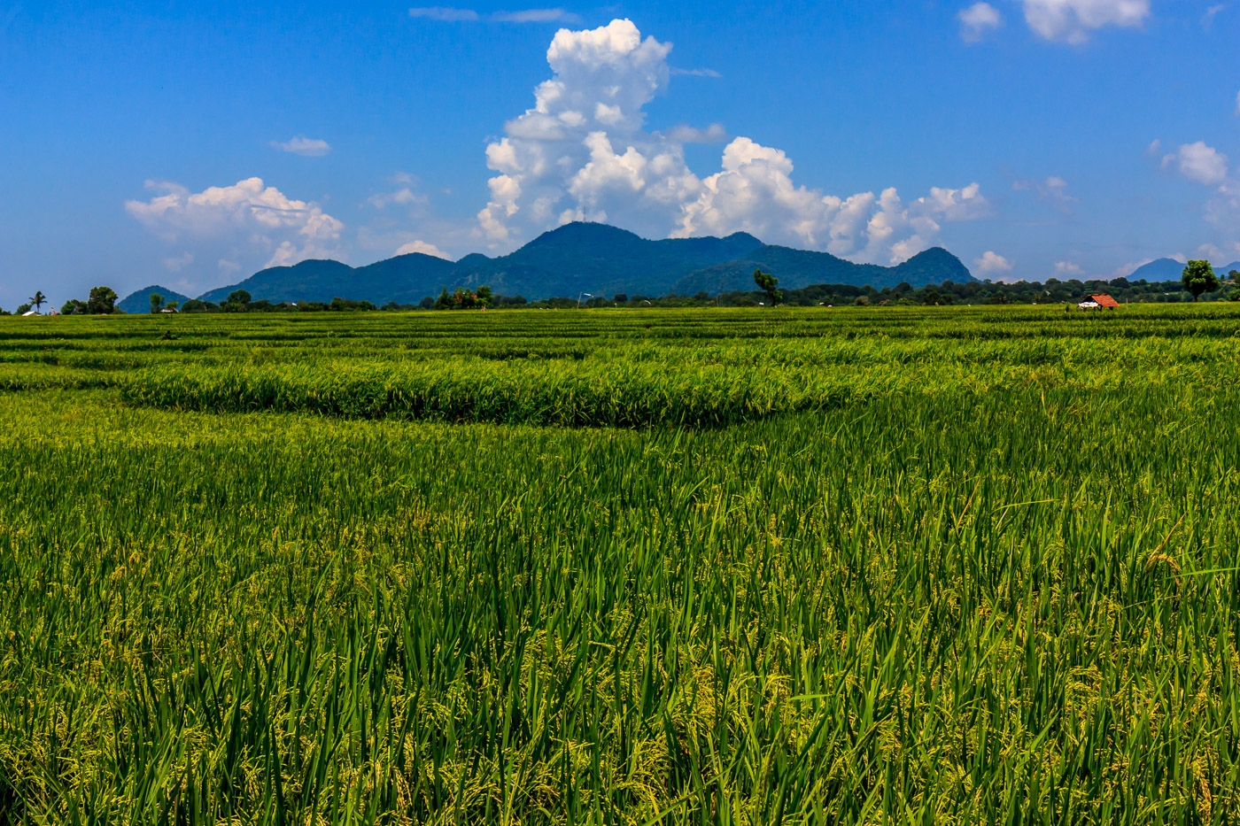 Fields of wheat and mountains gave Sumbawa its own beauty.