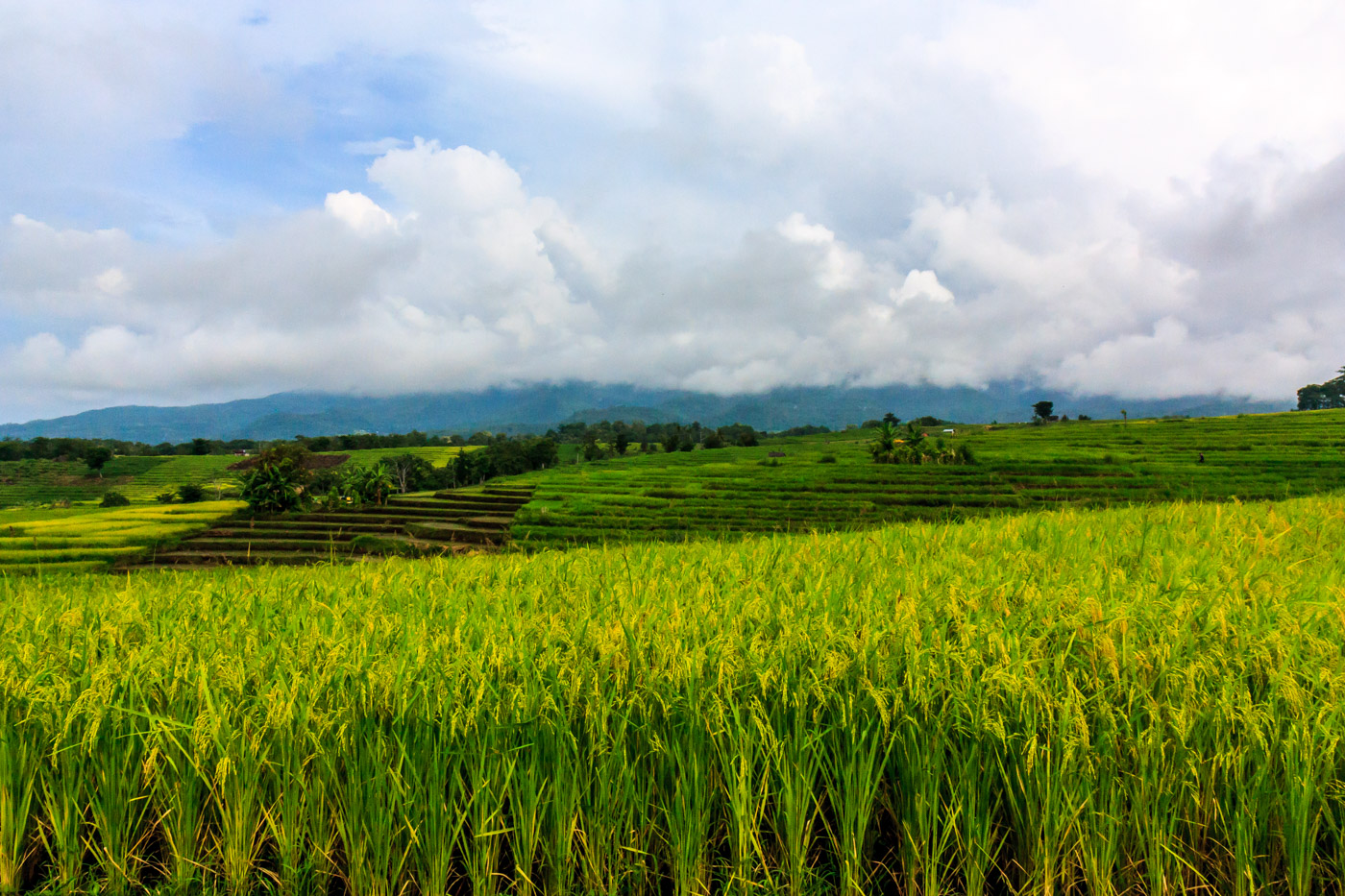 Beautiful fields.