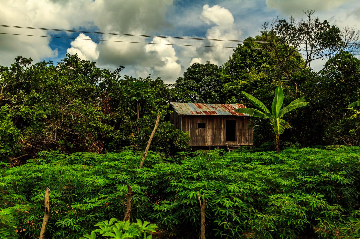 House among the green.