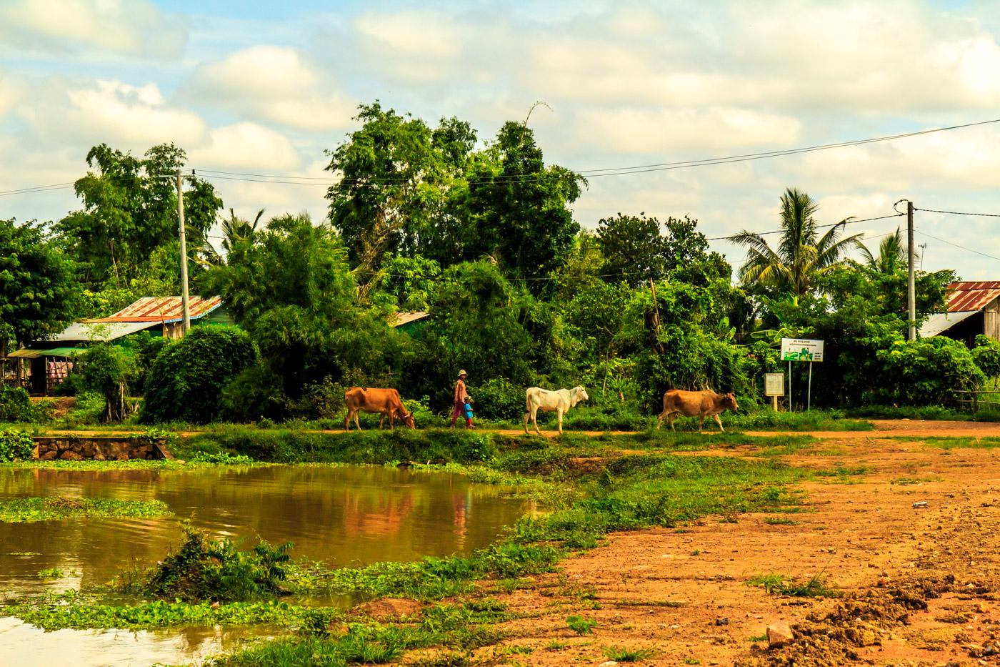 Village traffic.