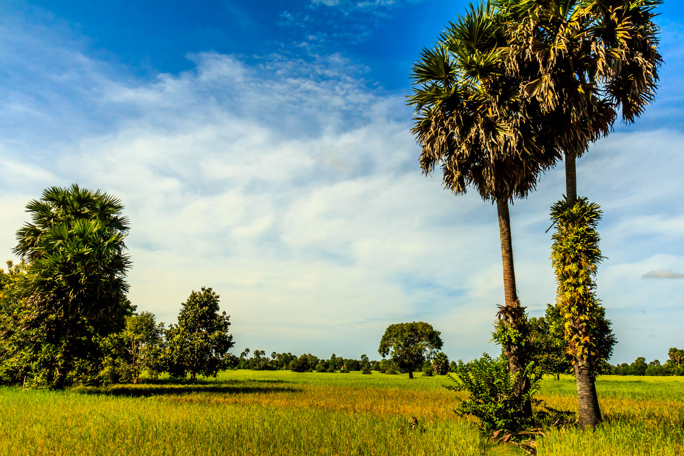 In the fields of Cambodia.