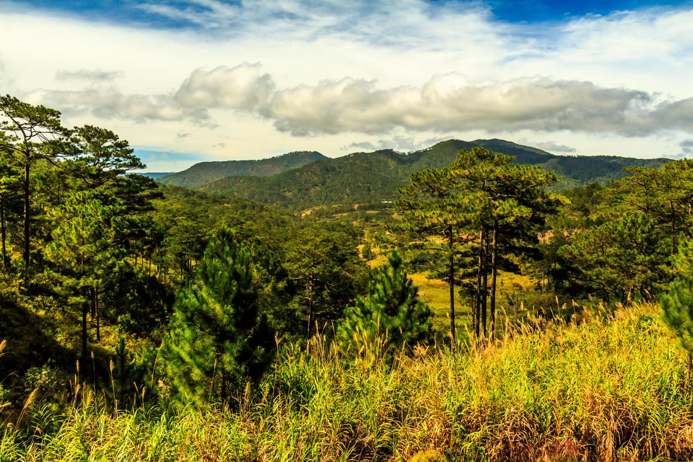 I said goodbye to the pine trees of Da Lat.