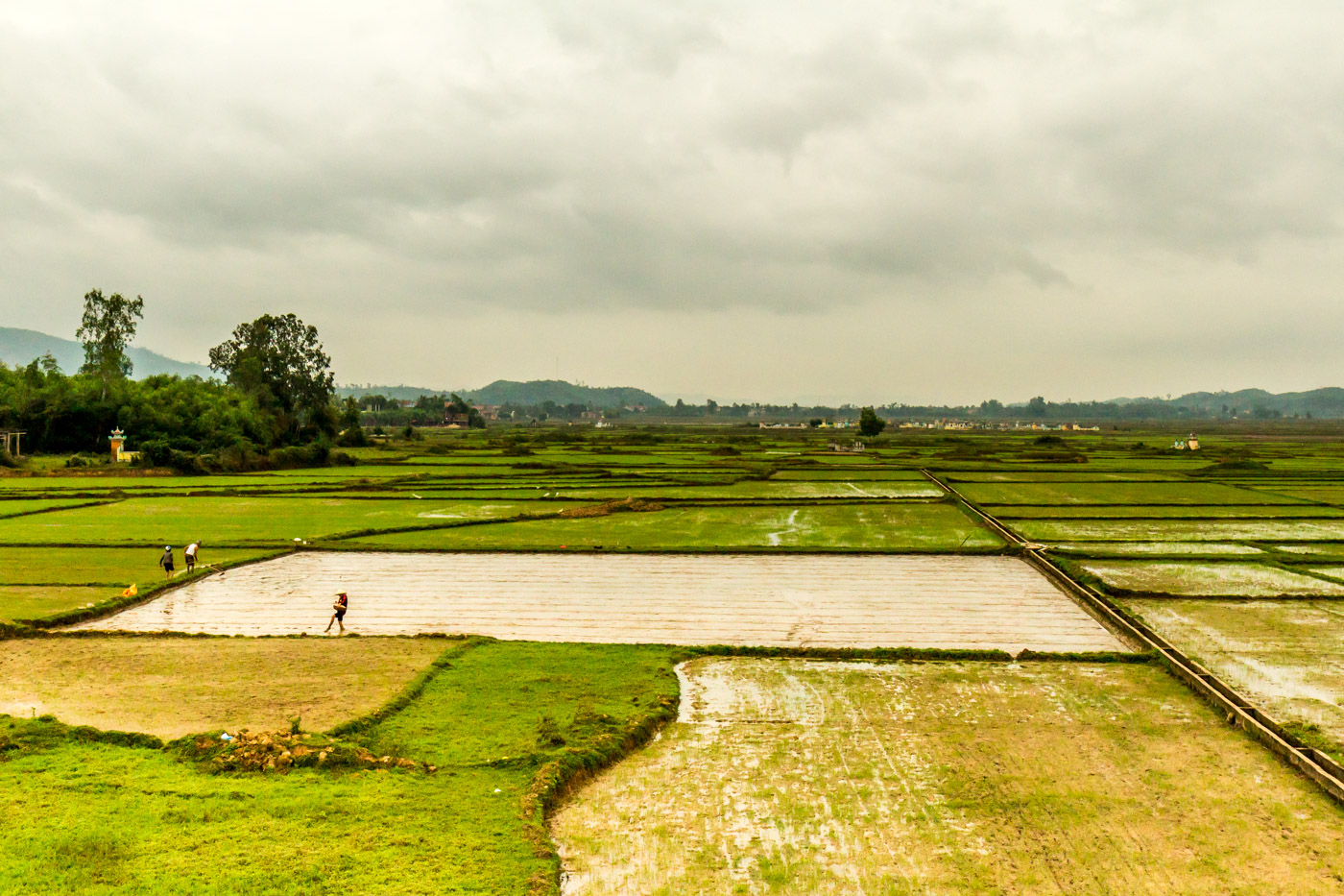 The rice fields of Phong Nha.