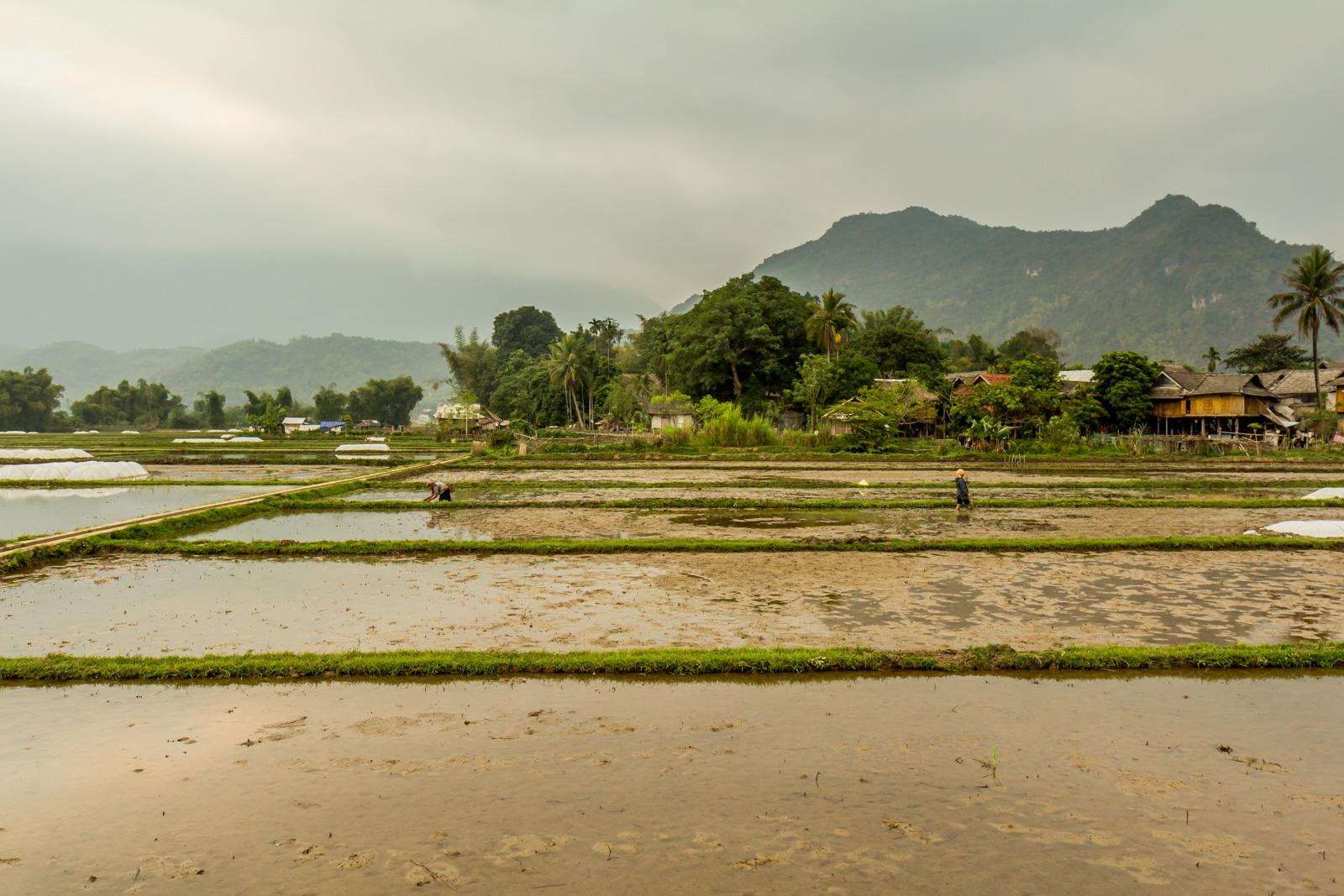 In the idyllic fields of Mai Chau.
